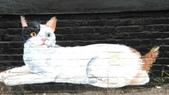 青埔社區貓世界:IMAG0411.jpg