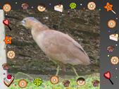 嘉義公園:bird