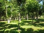 嘉義公園:IMGP1937.JPG