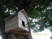 真假小鳥屋:IMGP2041.JPG