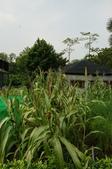 台北市中正區:台北植物園