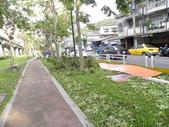 蘇迪勒颱風後景象:DSCN9926.JPG