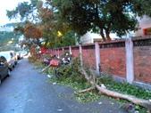 蘇迪勒颱風後景象:DSCN9922.JPG