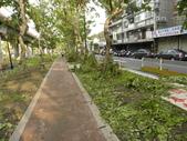 蘇迪勒颱風後景象:DSCN9925.JPG