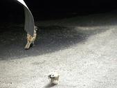 生態人:麻雀