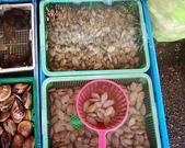生態人:海瓜仔與菜瓜籽
