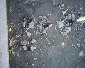 生態人:土壤結皮