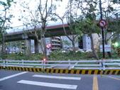 蘇迪勒颱風後景象:DSCN9920.JPG