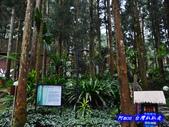 201310南投-溪頭明山森林會館:明山森林會館30.jpg
