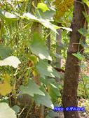 201207嘉義-波妮塔香草花園:波妮塔05.jpg
