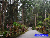 201310南投-溪頭明山森林會館:明山森林會館32.jpg
