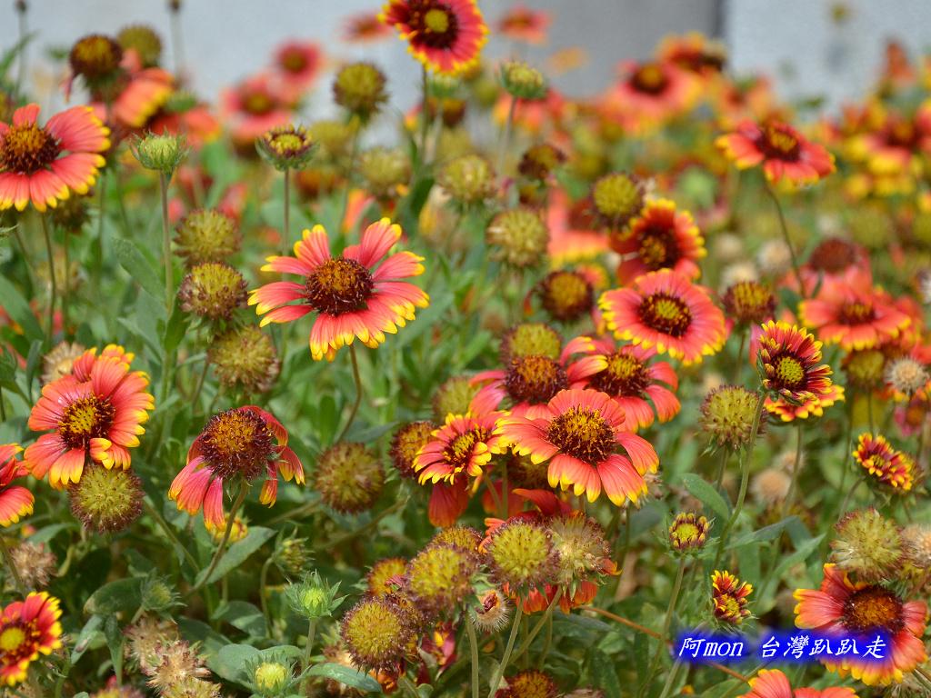 201211澎湖-澎湖生活館:澎湖生活館33.jpg