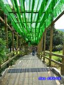 201206嘉義中埔-獨角仙農場:獨角仙34.jpg
