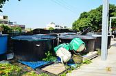 201502彰化-沙里仙鱘龍魚餐廳:沙里仙07.jpg