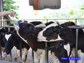 201206嘉義中埔-獨角仙農場:獨角仙15.jpg