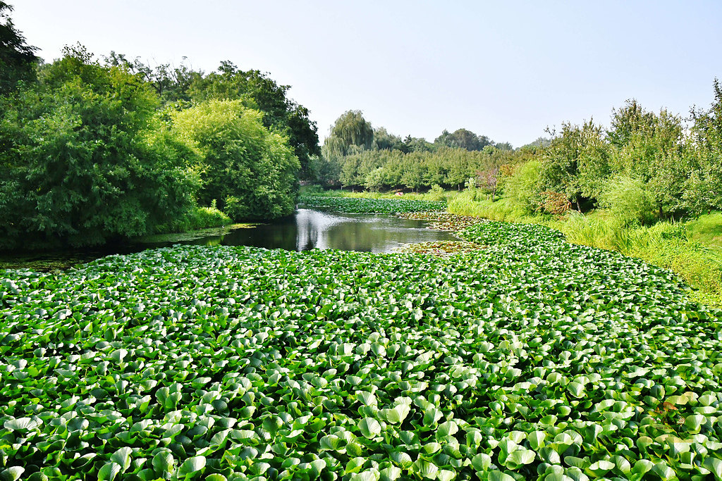201707中國瀋陽-世博園:瀋陽世博園20.jpg