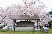 201403日本-關西京板神賞櫻:關西京阪神賞櫻06.jpg