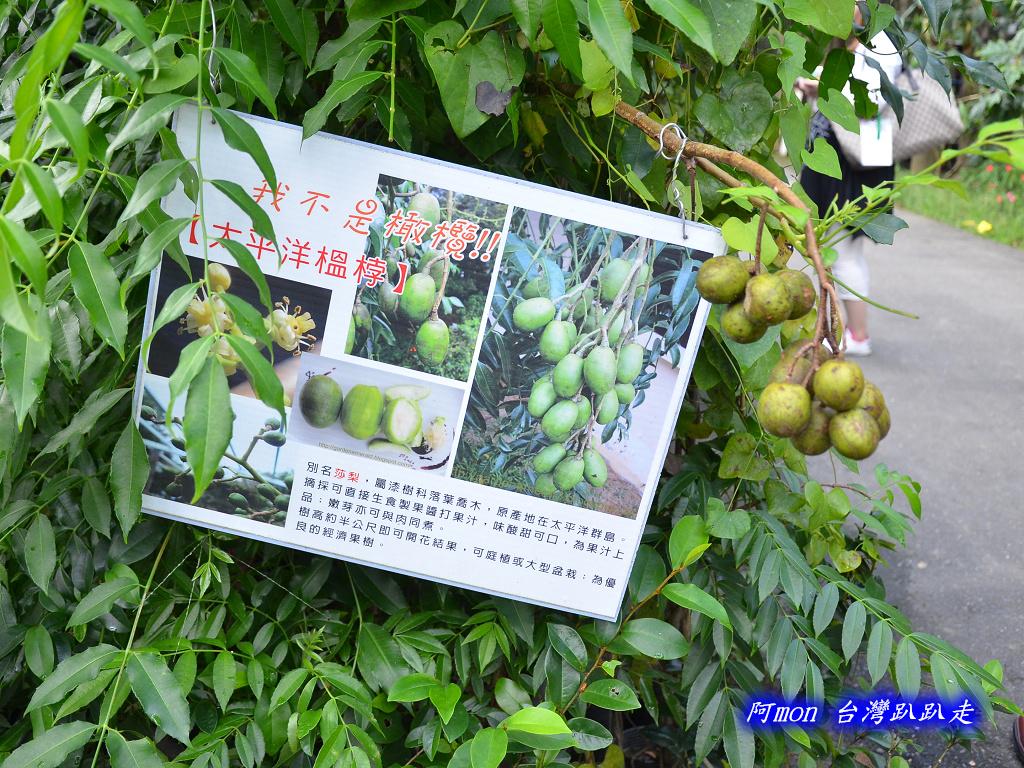 201206嘉義中埔-豐山生態園區:豐山生態園區09.jpg