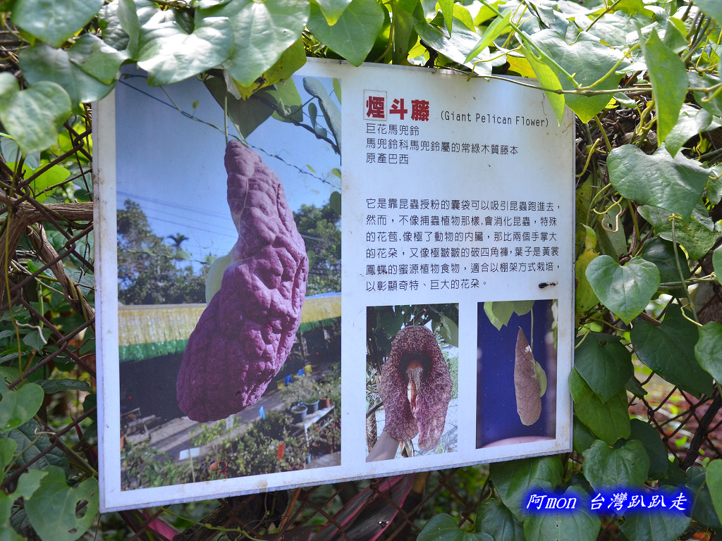 201206嘉義中埔-豐山生態園區:豐山生態園區12.jpg
