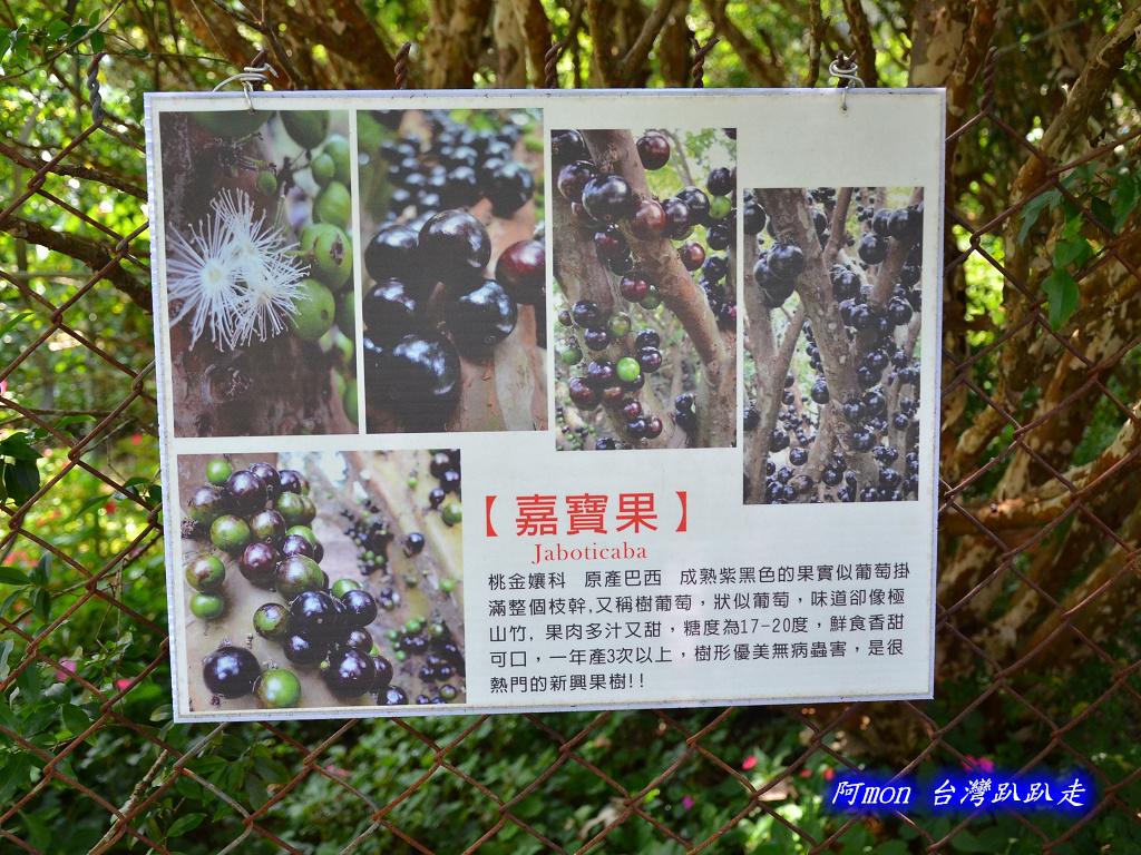 201206嘉義中埔-豐山生態園區:豐山生態園區13.jpg