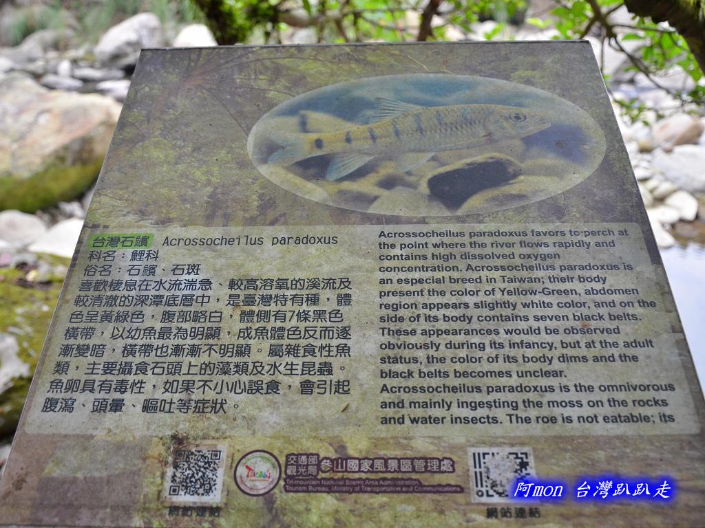 201211苗栗-蓬萊溪生態園區+護魚步道:蓬萊溪14.jpg