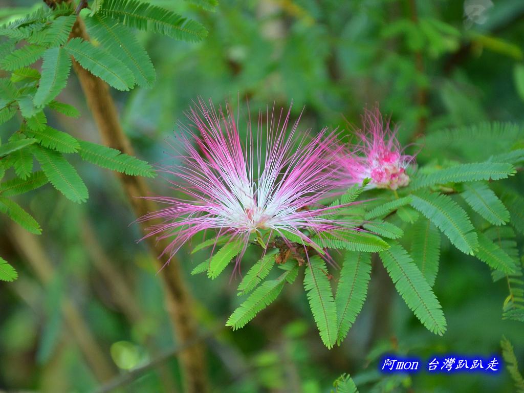 201206嘉義中埔-豐山生態園區:豐山生態園區16.jpg