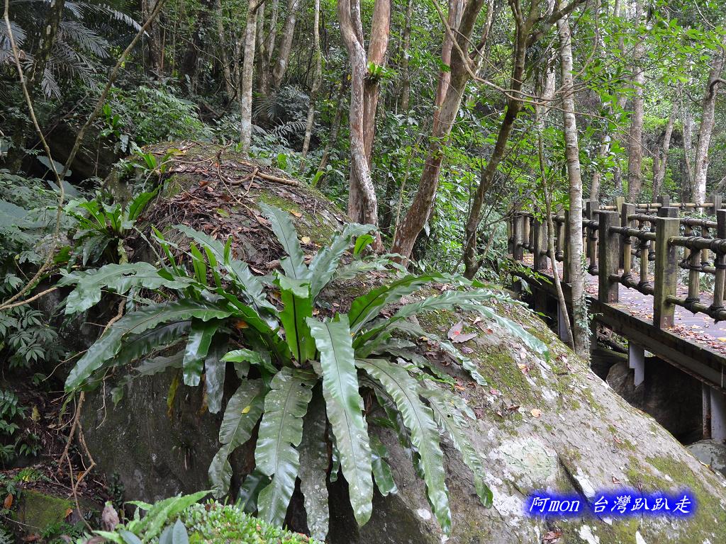 201211苗栗-蓬萊溪生態園區+護魚步道:蓬萊溪28.jpg