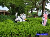 201206嘉義中埔-獨角仙農場:獨角仙08.jpg
