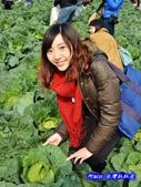 201312雲林-土庫高麗菜辦桌:雲林高麗菜29.jpg