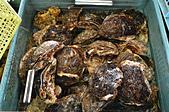 201606日本大分-魚市魚座:日本大分魚市魚座11.jpg