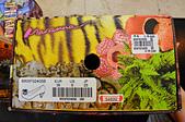 201510台北-麥坎納鞋子特賣會:麥肯納16.jpg