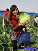 201312雲林-土庫高麗菜辦桌:雲林高麗菜30.jpg