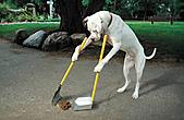 日記插圖-1:這年當狗也不好混了