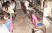 日記插圖-1:深夜上網的雞.JPG