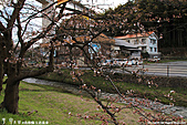 H22.島根松江 早咲きの桜が開花する早春の玉造溫泉を訪ね:IMG_7299.jpg