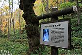 H22.青森 奥入瀬渓流 銚子大滝**:IMG_0804.jpg