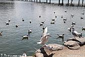 H22.九州福岡 大濠公園野鳥の森*:IMG_0882.jpg