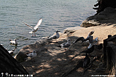 H22.九州福岡 大濠公園野鳥の森*:IMG_0767.jpg