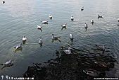 H22.九州福岡 大濠公園野鳥の森*:IMG_0773.jpg