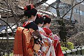 H23.京都祇園白川「藝妓」外拍:IMG_9269.jpg