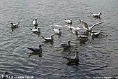 H22.九州福岡 大濠公園野鳥の森*:IMG_0779.jpg