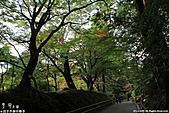 H22.岩手 平泉関山金色堂**:IMG_7879.jpg