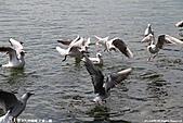 H22.九州福岡 大濠公園野鳥の森*:IMG_0782.jpg