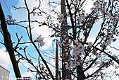 H22.島根松江 早咲きの桜が開花する早春の玉造溫泉を訪ね:IMG_7324.jpg