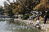 H22.九州福岡 大濠公園野鳥の森*:IMG_0791.jpg