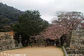 H22.山口 萩城跡,指月公園:IMG_5103.jpg