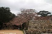 H22.山口 萩城跡,指月公園:IMG_5106.jpg