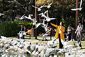 H22.九州福岡 大濠公園野鳥の森*:IMG_0800.jpg