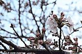 H22.島根松江 早咲きの桜が開花する早春の玉造溫泉を訪ね:IMG_7329.jpg