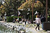 H22.九州福岡 大濠公園野鳥の森*:IMG_0818.jpg